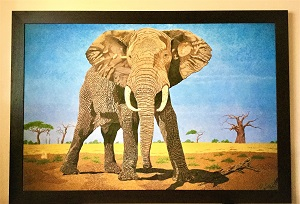 Exclusive Print African Bull Elephant on canvas 116cm x167 cm (2).jpg